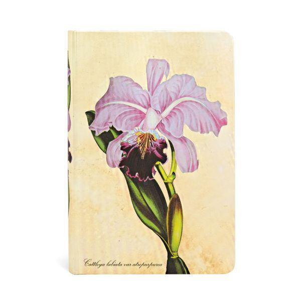 Botanical Brazilian Orchid Mini Lin